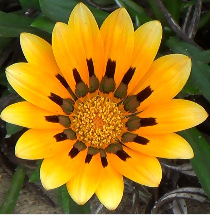 Blume1.jpg