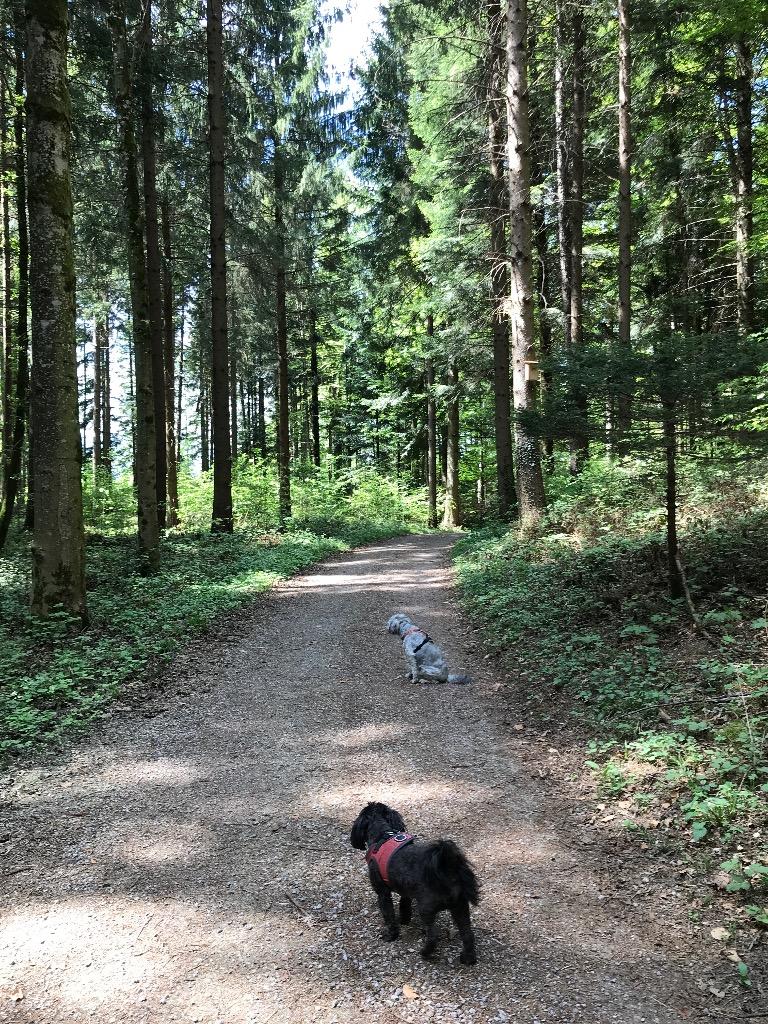 StartaufdemBurgunderweg_2018-05-01.jpg